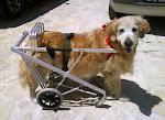 Cadeiras de Rodas para Animais