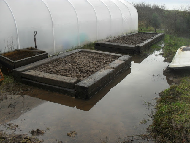 veg growing, raised veg bed, flood