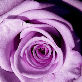 Sinta o perfume das rosas como se fosse a fragância do amor
