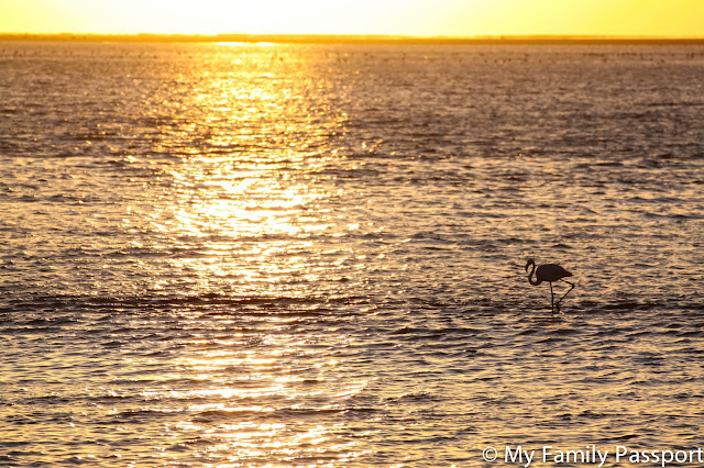 pelicanos namibia