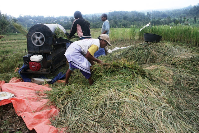 Sektor pertanian berpotensi turunkan tingkat kemiskinan