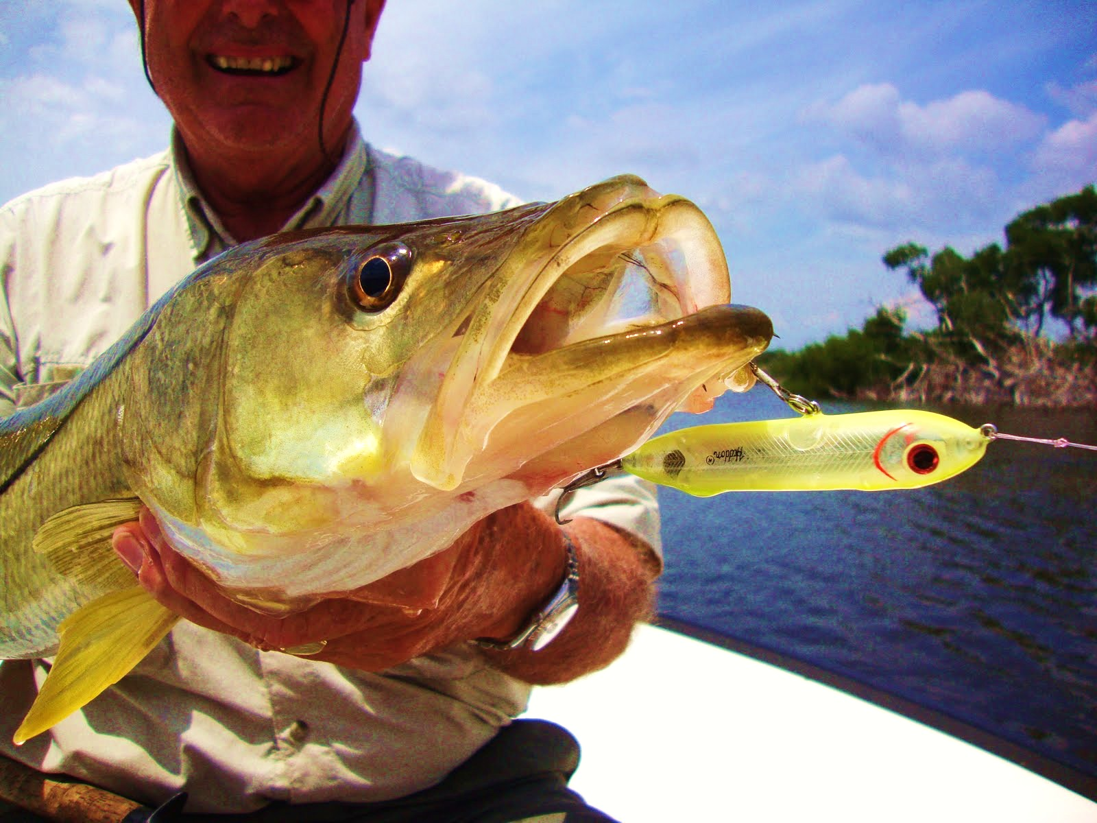 The pine island angler zara spook the best lure for for Snook fishing florida