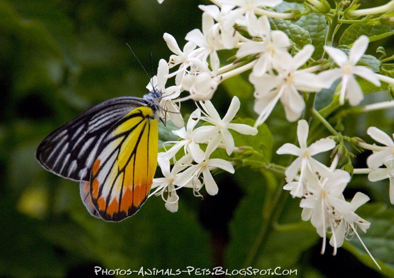 http://4.bp.blogspot.com/-GvLAQ02hiUc/Tts1JNTq1vI/AAAAAAAACWQ/G_Zi4z0h7Bo/s1600/Butterfly%2Bpicture.jpg
