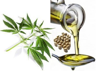 Hemp seed oil Benefits in Health & Cancer Treatment