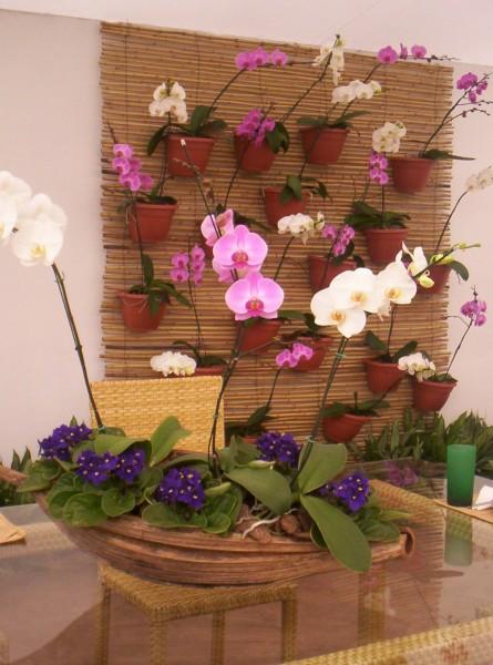 jardim vertical orquideas:Amei catinho com painel cheinho de orquideas. -Se eu tivesse um desse