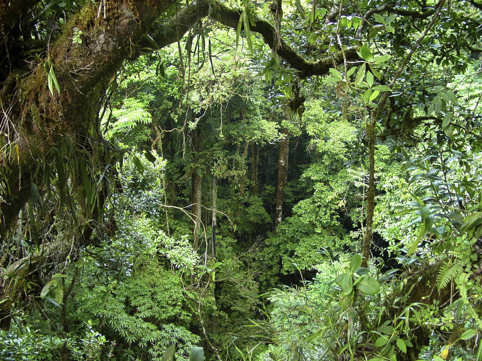 Two types of rainforest tropical rainforest and temperate rainforest