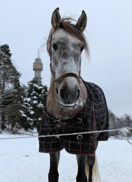 kaknästornet och häst