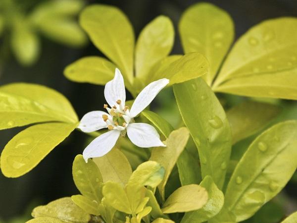 6 plantas f ciles de cultivar para plantar este verano - Plantas para hacer setos ...