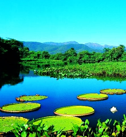 Pantanal Matogrossense National Park,Brazil: