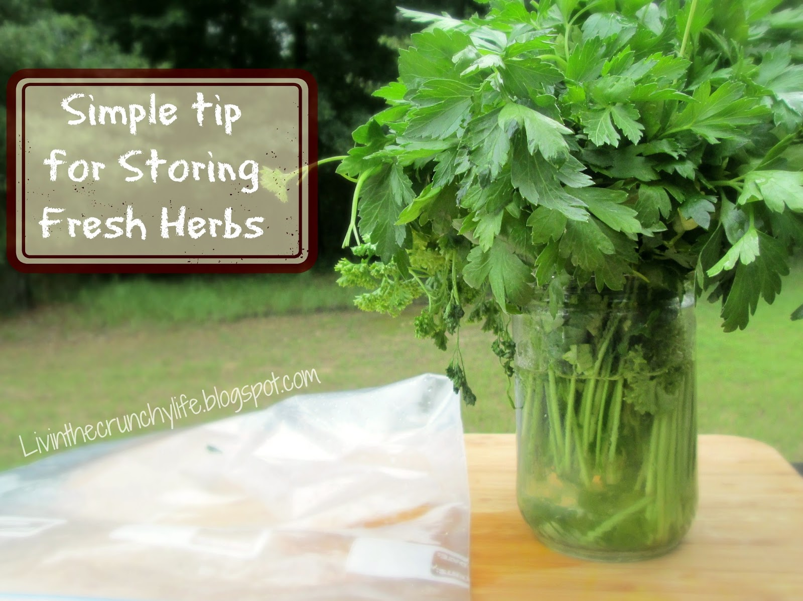 Simple Storage Tip for Longer-Lasting Fresh Herbs
