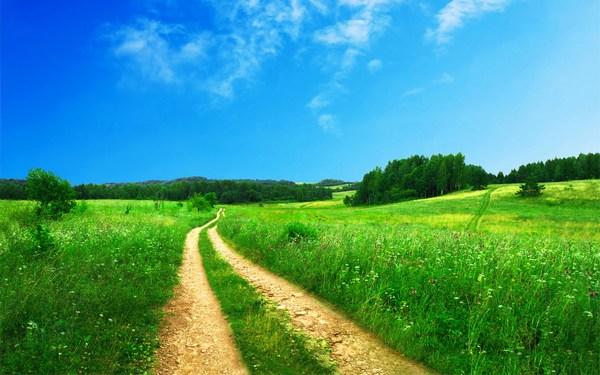Beautiful Scenery Wide Green Field HD Pics