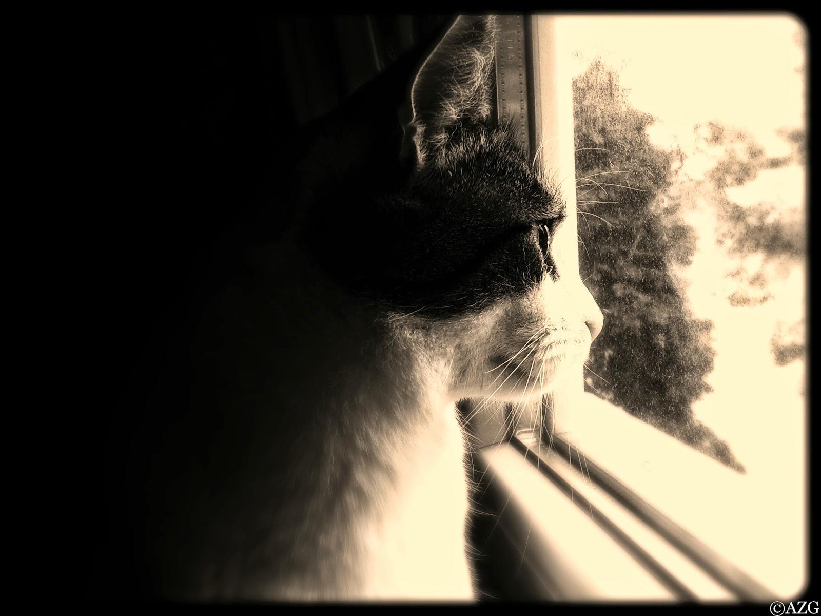 Vid o du jour un chat qui aime vraiment norm ment son ma tre un oeil sur tout - Chat qui dort sur son maitre ...