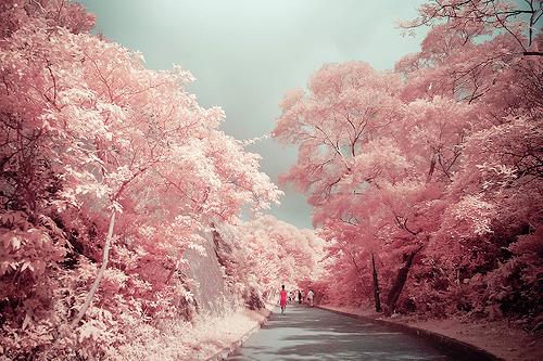 Árboles que florecen solo una vez al año.