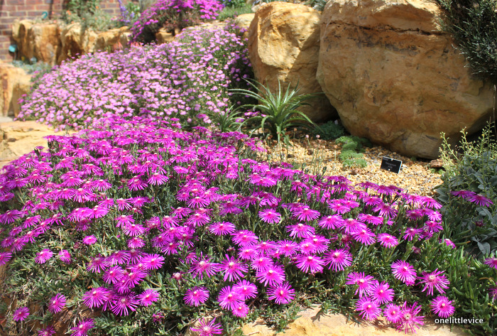 one little vice lifestyle blog: Alpine Garden at Wisley in June July