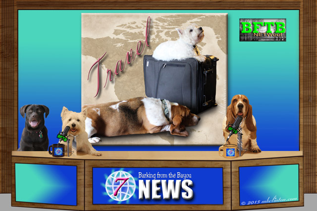 BFTB News set with three dogs and travel backdrop