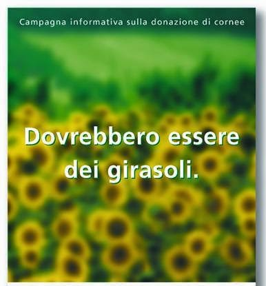 Veneto Eyebank Foundation