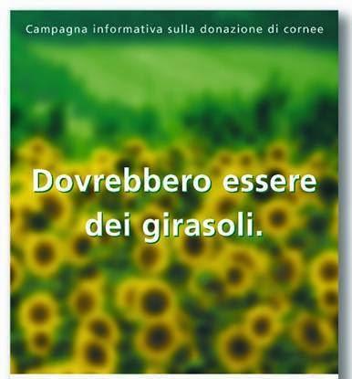 Veneto Eyebank Foundation