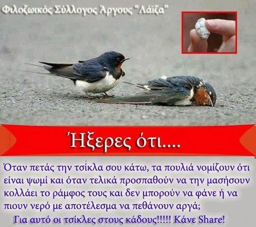 Δεν μασάνε τα πουλιά  τσίχλες...
