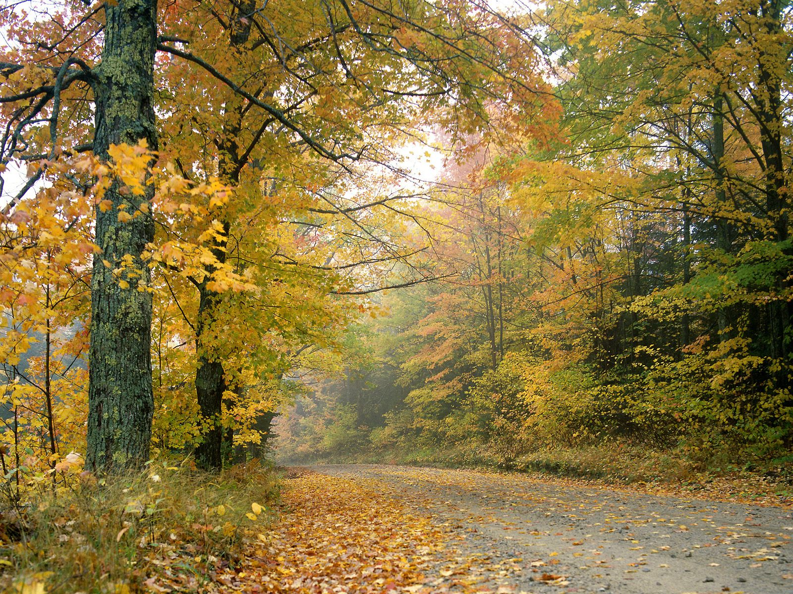 http://4.bp.blogspot.com/-Gxvdm0xtJ6c/UEKGueMIpWI/AAAAAAAAAKU/ttQUteDT7q0/s1600/Nature+Landscapes+HD+Wallpapers+(55).jpg