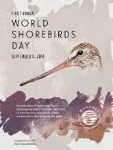 Día mundial de las aves playeras