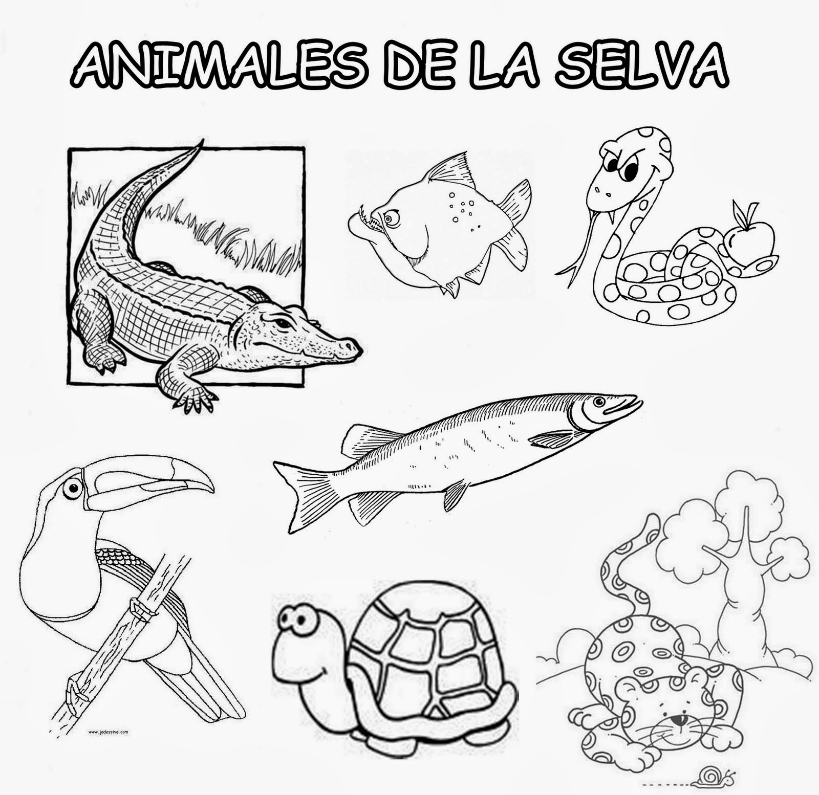 Único Libros Para Colorear Amazonas Bosquejo - Dibujos Para Colorear ...