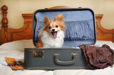 http://galazioneiro.blogspot.gr/, Πως να ηρεμήσετε έναν νευρικό σκύλο.