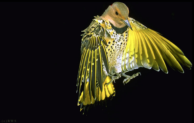 நான் பார்த்து ரசித்த புகைப்படங்கள் சில.... - Page 2 Flying+Birds+%252812%2529