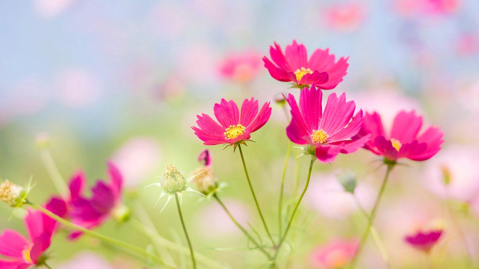 fotos de jardines con flores Plantas facilisimo com - Imagenes De Flores Y Jardines