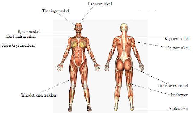 farget utflod navn på muskler i kroppen