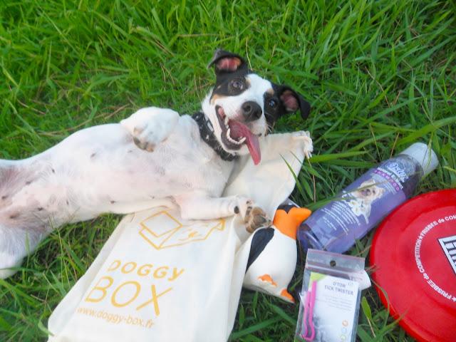 Ma deuxième Doggy box, coffret cadeau pour chien