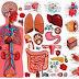 Rangkuman Sistem Organ Manusia