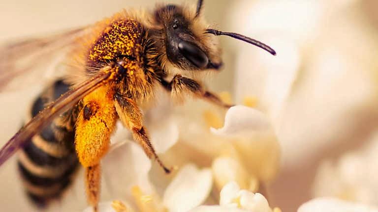 http://tecniceaviseupuebla.blogspot.pt/2014/02/las-abejas-en-peligro-patrimonio-natural.html