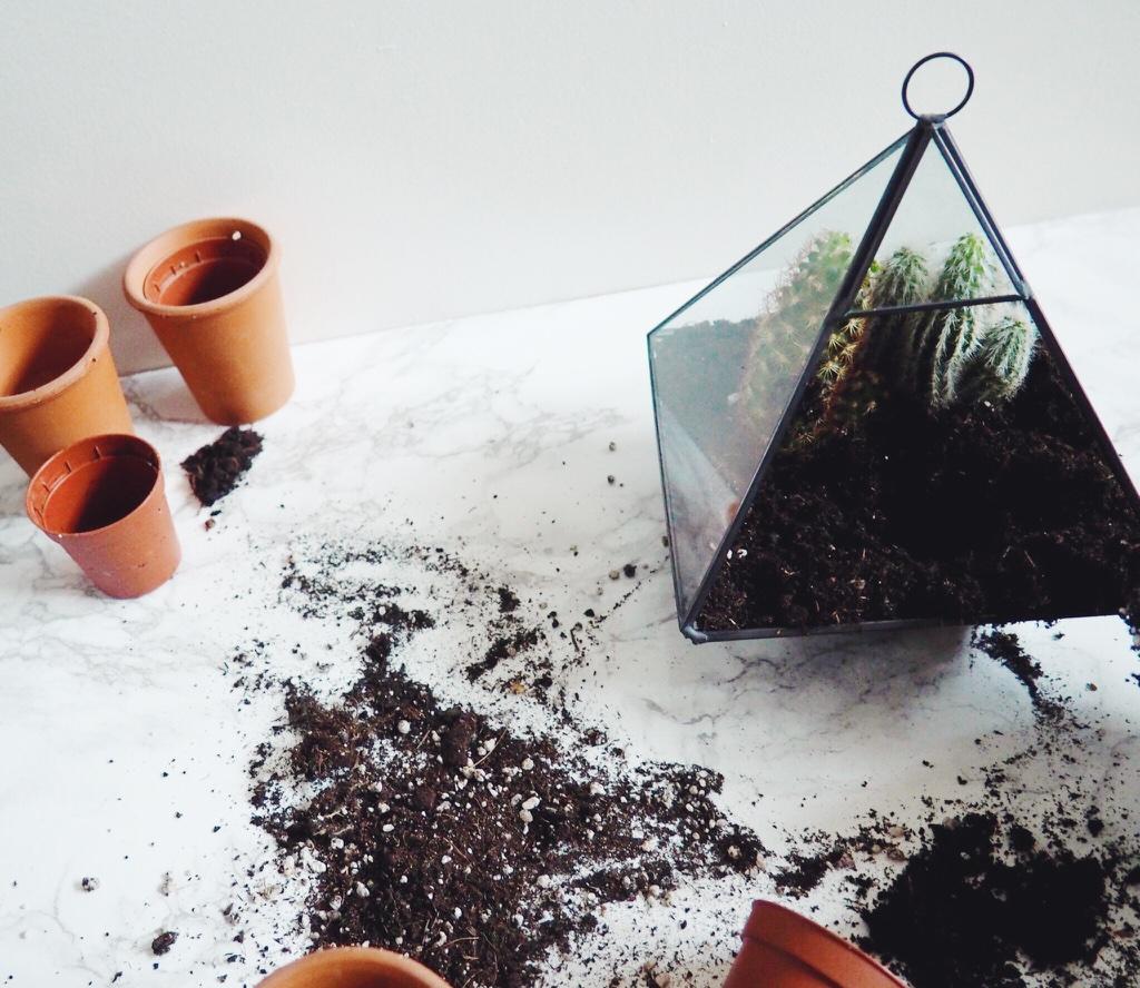 terrarium, cactus, cacti, fbloggers, lbloggers, makeyourownterrarium, howtomakeyourownterrarium, cactusterrarium, stepbystepterrarium