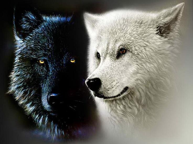 δίδαγμα ψυχής οι δύο λύκοι