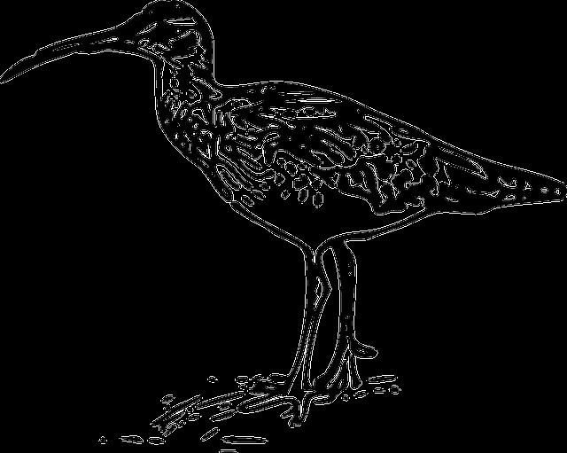 ave para imprimir