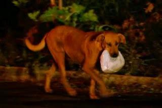 Anjing ini Cari makan Buat Majikannya Yang Miskin