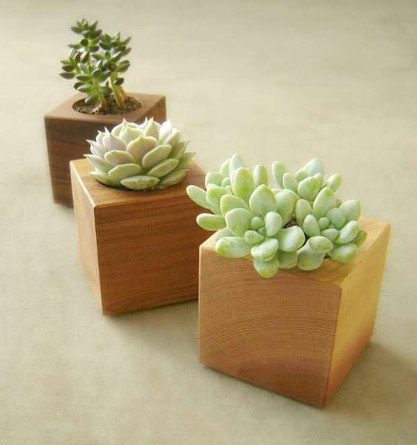 modern wood succulent planter cubes