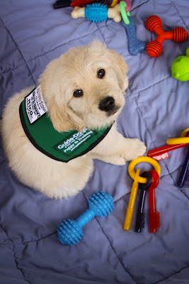 Golden Retrievier puppy in a green coat, sitting on a blanket and surrounded by toys