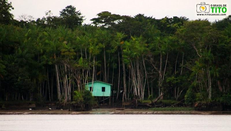 Casa e açaizeiros na ilha de Paquetá-Açu, em Belém - Pará