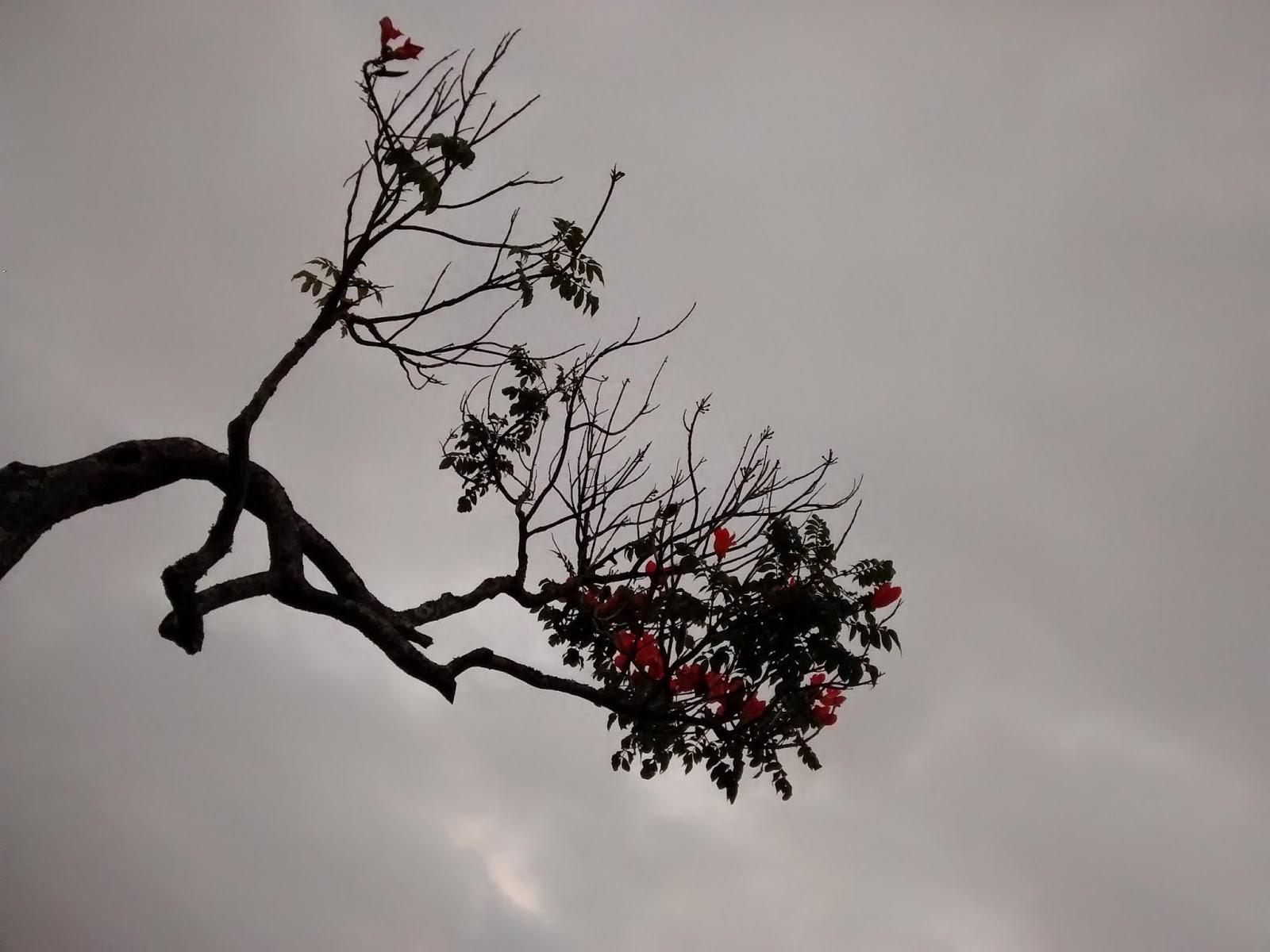 Foto tirada no Parque Ceret