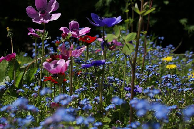 Le jardin d 39 alecs concours promesse de fleurs for Promesse de fleurs