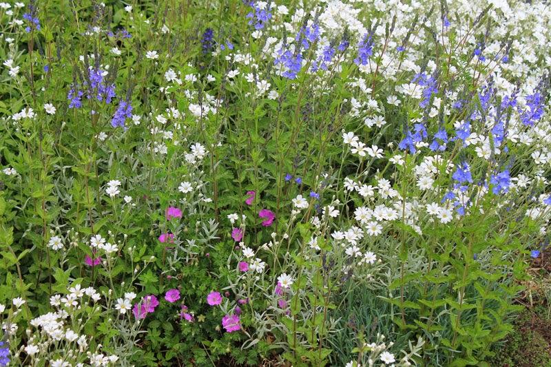 Collina in fiore maggio/giugno