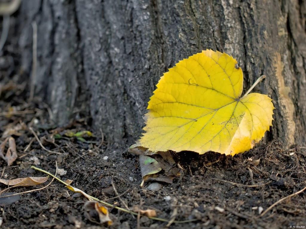 """<img src=""""http://4.bp.blogspot.com/-H-tkxxVOo6I/Ut5AMHvx1_I/AAAAAAAAJf4/EukSIMyakCQ/s1600/golden-leaf.jpeg"""" alt=""""goden leaf"""" />"""