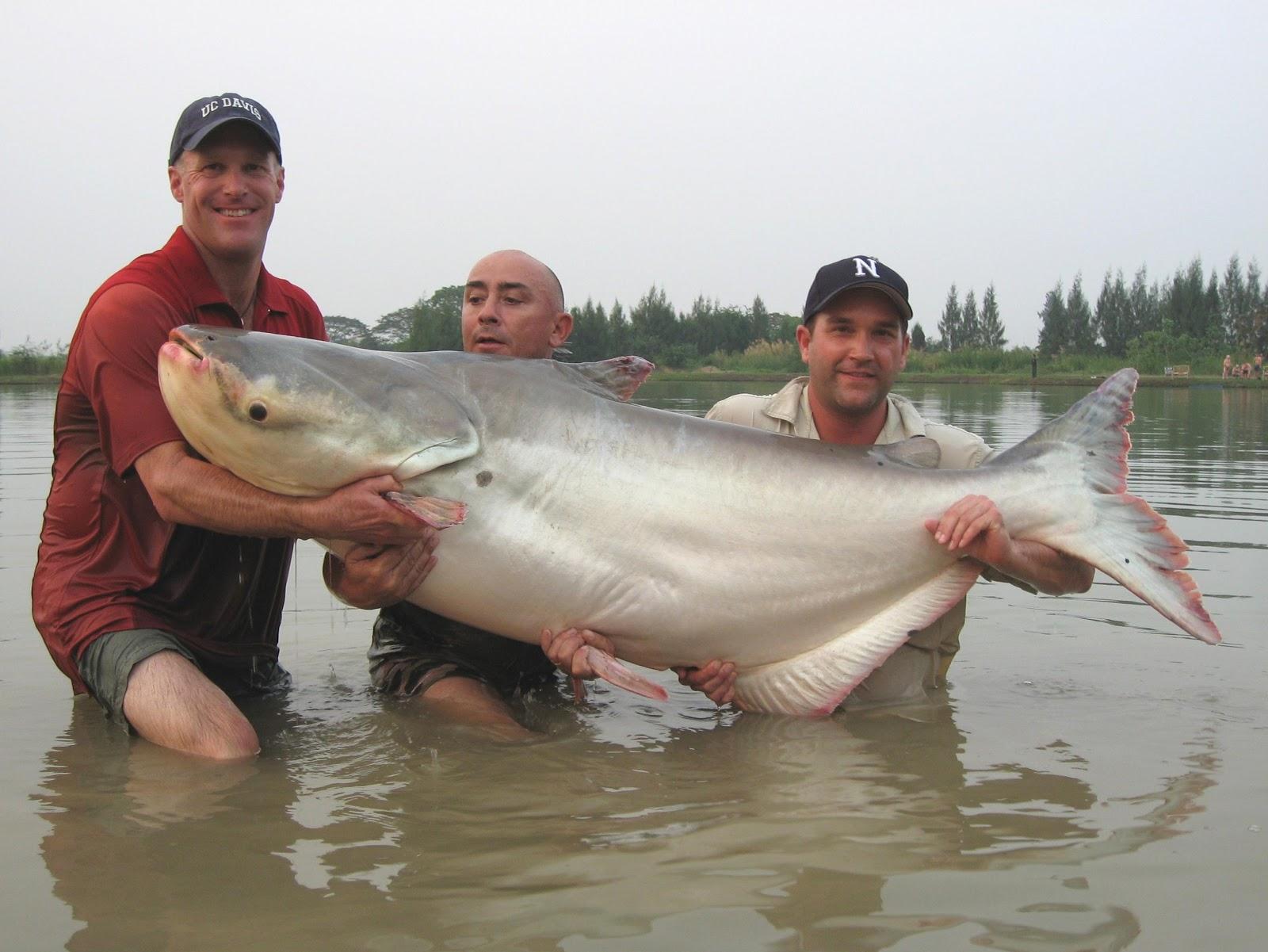 Pesca intorno al mondo leviatani d 39 acqua dolce for Grosso pesce di lago