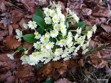 Primavera: temps de vida