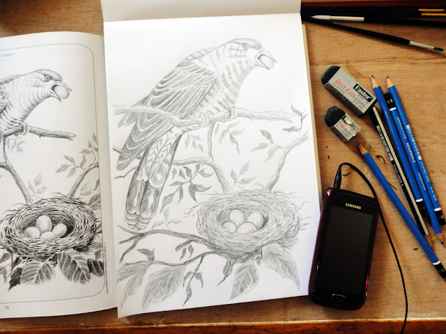 Art Li and Stuff -  Pencil drawing of The bird and its nest.