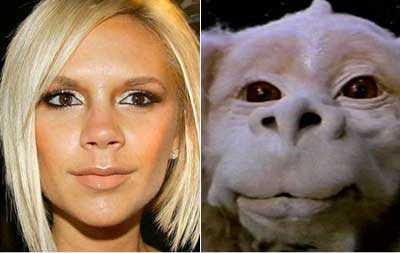 Celebrity Look-A-likes funny
