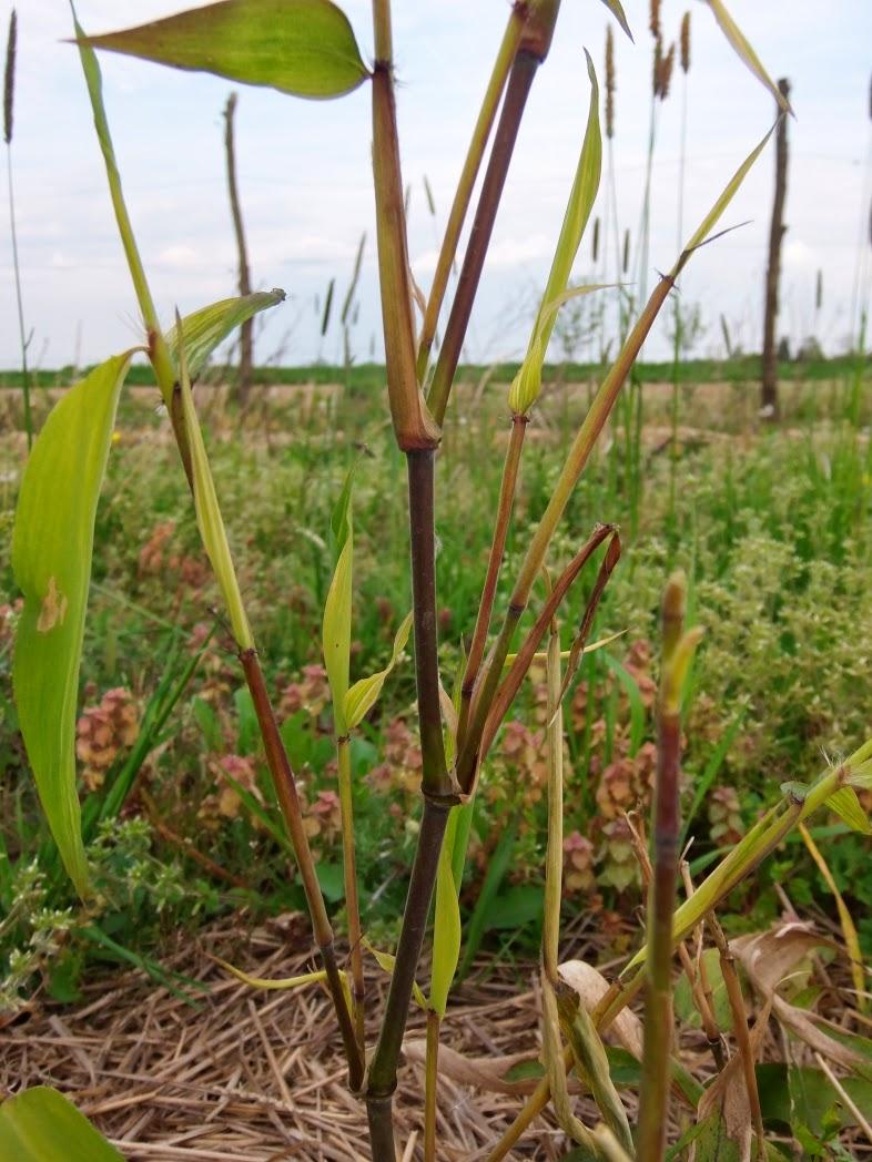 Moso bamboo diary 3 in between for Moso bamboo prezzi