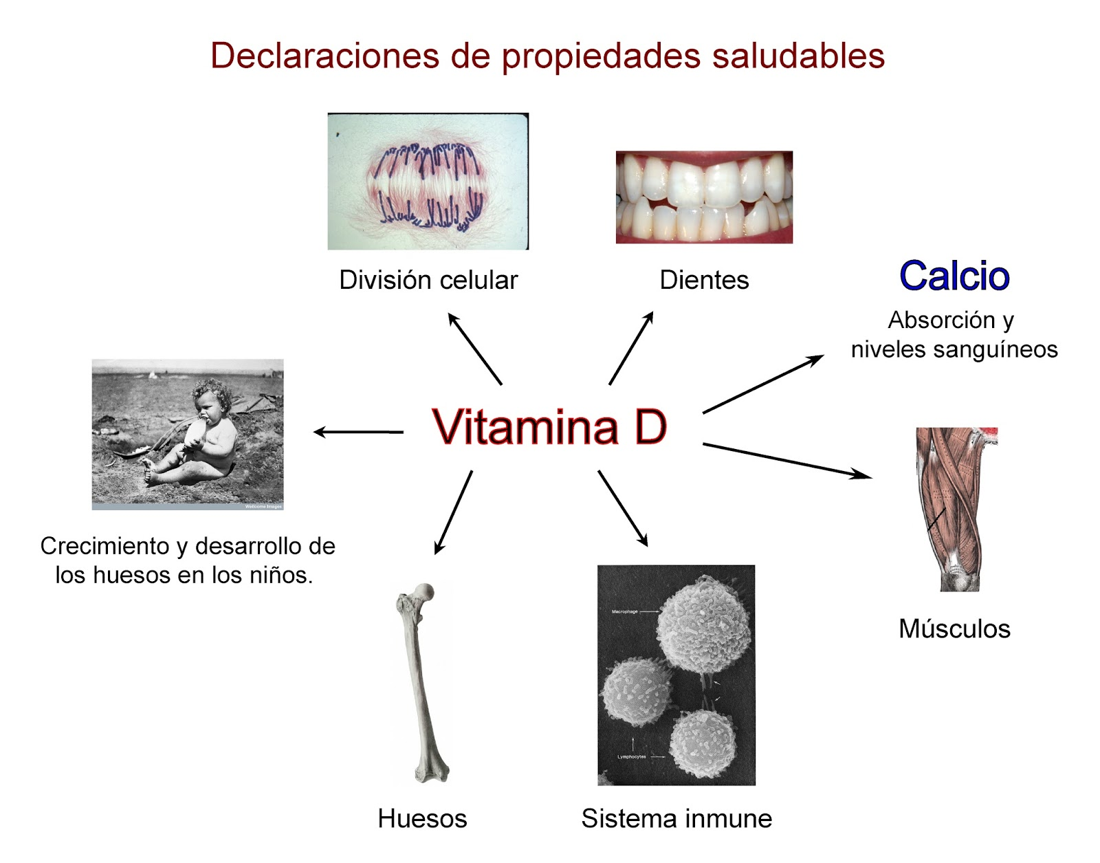 Declaraciones de salud para la vitamina D que pueden hacer los alimentos