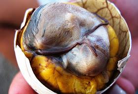 Balut (Camboddia, Philippine)